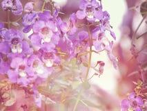 Vergissmeinnichtblumen mit Filterfarbe Lizenzfreie Stockfotos