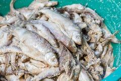 Vergiste vissen Royalty-vrije Stock Foto