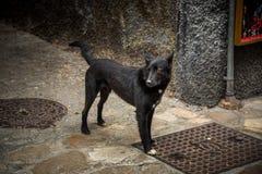 övergiven hund Royaltyfri Fotografi
