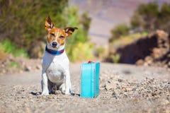 Övergiven och borttappad hund Arkivbild