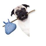 Övergiven och borttappad hund Arkivfoton
