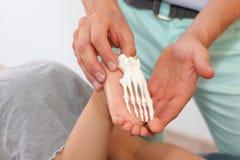 Vergleich des Fußes des Kindes mit einem anatomischen Modell Stockbild