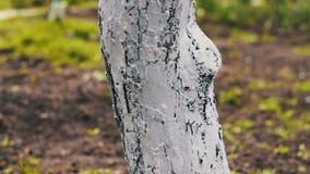 Vergoelijk bomen in de lente De zorgen van de tuinmanvrouw voor de bomen in de tuin stock footage
