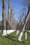 Vergoelijkte bomen Stock Foto's