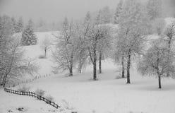 Vergoelijkte bomen tijdens overvloedige sneeuwval Stock Foto's
