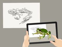 Vergrößerte Wirklichkeit AR Das Skelett des Frosches wird durch ein wirkliches Bild auf dem Tablettenschirm ergänzt Hände halten  stockfotos