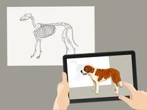 Vergrößerte Wirklichkeit AR Das Skelett des Hundes wird durch ein wirkliches Bild auf dem Tablettenschirm ergänzt Hände halten ei stockfotos