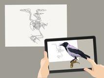 Vergrößerte Wirklichkeit AR Das Vogel ` s Skelett wird durch ein wirkliches Bild auf dem Tablettenschirm ergänzt Auch im corel ab stockbild