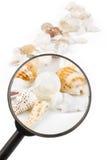 Vergrößerungsglas auf Seashells Stockfoto