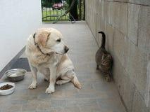 Verhältnisse zwischen Hund und Katze Stockfotos