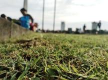 Verhaal van gras stock afbeelding