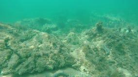 Verheerender Meeresgrund in der Zeitlupe stock video footage