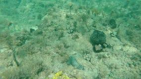 Verheerender Meeresgrund in der Zeitlupe stock video