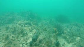 Verheerender Meeresgrund in der Zeitlupe stock footage