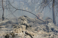Verheerendes Feuer Lizenzfreies Stockbild
