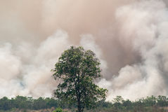 Verheerendes Feuer - brennendes Waldoekosystem wird zerstört lizenzfreie stockfotos