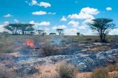 Verheerendes Feuer in der afrikanischen Savanne Stockfotos