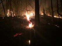 Verheerendes Feuer oder Waldbrände Stockfotografie