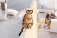 Verhongerde kat Stock Fotografie