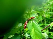 Verhouding van insecten in aard Stock Afbeeldingen