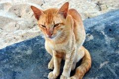 Verhungernde Katze in Malaysia lizenzfreies stockfoto