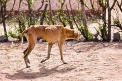 Verhungernder Hund der Grausamkeit lizenzfreie stockfotografie