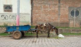 Verhungerndes Arbeits-Pferd Stockfoto
