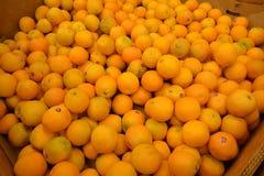 Veriety délicieux d'oranges Photos libres de droits