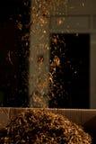 Verificação da qualidade do cigarro Fotos de Stock
