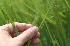 Verifique suas colheitas foto de stock