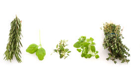 Verious herbs Royalty Free Stock Image