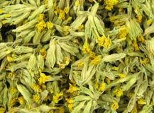 Veris de Primula de Cowslip Photo stock