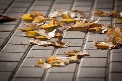 Verjährte Blätter Lizenzfreies Stockfoto