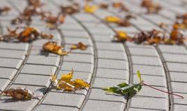 Verjährte Blätter Lizenzfreie Stockbilder