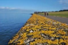 Verja con el musgo y el liquen anaranjados, detalle macro, costa escocesa Imágenes de archivo libres de regalías