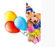 Verjaardagshond met giften en ballons. Stock Foto's