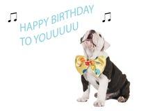 Verjaardagskaart met het Engelse buldog zingen Stock Fotografie