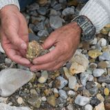 ?verkant ner sikten av manhanden som forskar mineraler Geologisk ockupation i naturen royaltyfri foto