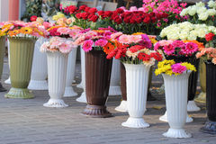 Verkauf der Chrysantheme Stockfotos