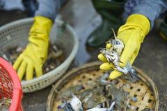 Verkauf der Fische stockbild
