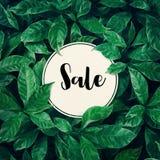 Verkauf mit grünem Blatthintergrunddesign mit Weißbuch lizenzfreie stockfotos