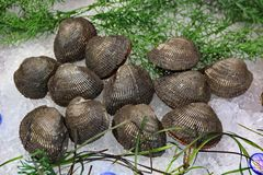 Verkauf von Austern in den Oberteilen Lizenzfreies Stockfoto