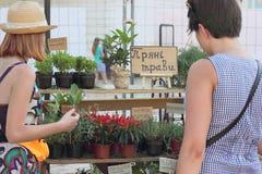 Verkauf von grünen Kräutern Stockfotos