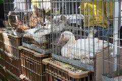 Verkauf von lebenden Tieren stockfotos
