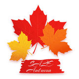 Verkaufsherbst Vektorillustration mit buntem Herbstlaub Kann für Flieger, Fahnen, Poster verwendet werden Stockbild