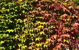 Verkeerslicht van bladeren Stock Foto's