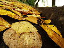 Verkehrsschild auf Asphalt mit gefallenem Herbstlaub stockfoto