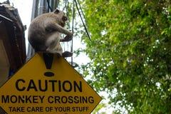 Verkehrsschild herein Asien-Vorsicht Affeüberfahrt mit dem Affen, der auf ihm sitzt Lizenzfreie Stockfotografie