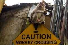 Verkehrsschild herein Asien-Vorsicht Affeüberfahrt mit dem Affen, der auf ihm sitzt Stockfotografie