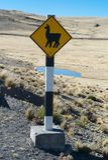 Verkehrsschild-Lama-Überfahrt lizenzfreies stockbild